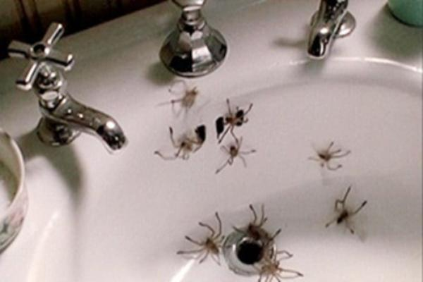 Image sourced from: http://newempressmagazine.com/2012/08/arachnophobia-1990-a-guide-to-surviving-spider-geddon/