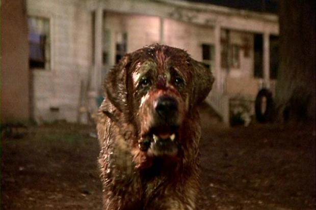 Image sourced from: http://www.dreadcentral.com/reviews/cujo-blu-ray