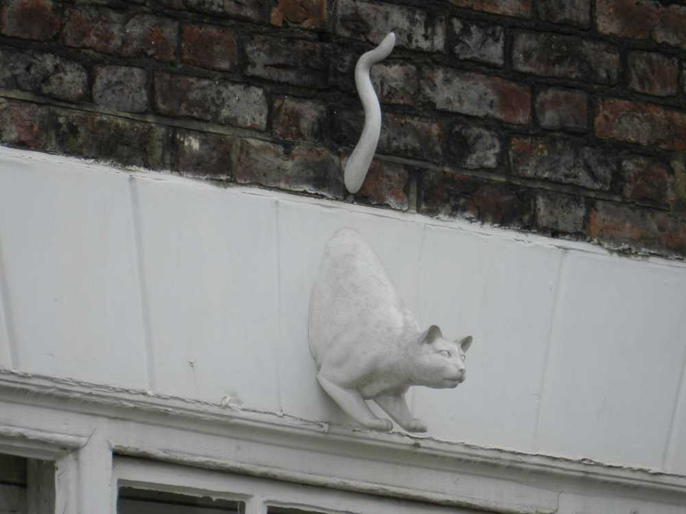 Ghost cat. Photos copyright QueenMab/Shipscook Photographic. contact simon.ball3@btopenworld.com for commercial reuse