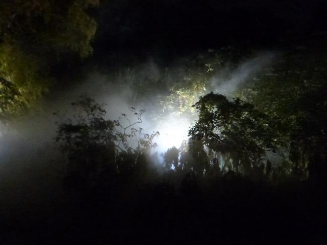 Spookyness at the Royal Botanic Gardens