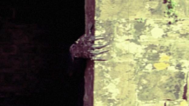 Mothman Curse 40